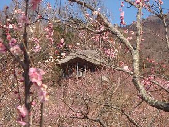 Mount Tsukuba: 梅林にて