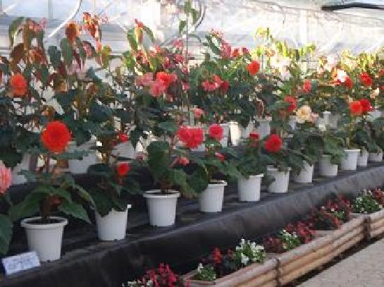 Mount Tsukuba: フラワーパークの温室のお花