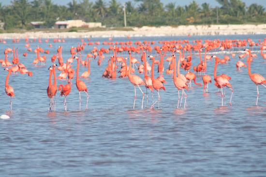 Hotel San Felipe : Flamingos at Ria LArgatos