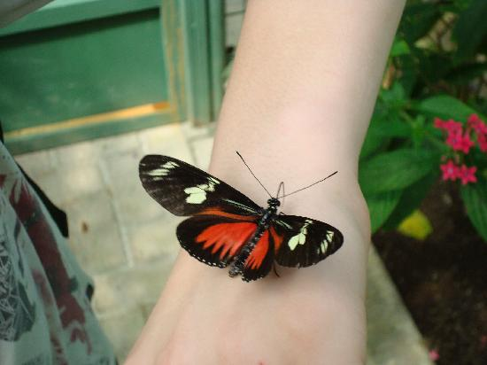 Monteverde Rustic Lodge: We really liked the butterfly garden that José recommended.