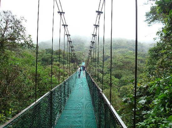 Monteverde Rustic Lodge: José arranged for us to go to the hanging bridges and it was great.