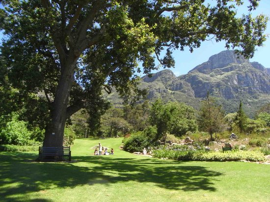 Kirstenbosch National Botanical Garden: Summer's day at Kirstenbosch