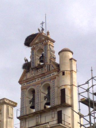 Hotel Mezquita: Storks nesting, Ecija