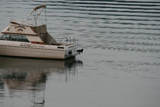The Tuwanek Hotel: Otters on the boat