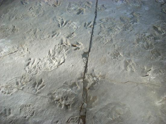 Dinosaur State Park & Museum: Some of the footprints
