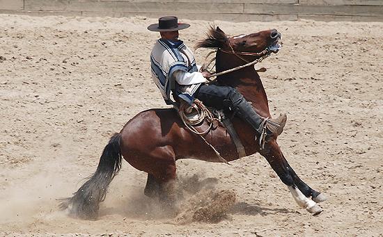 Casablanca, Cile: Horse Show