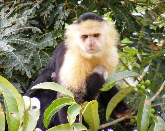 Gamboa Rainforest Resort: Monkey Island tour worth while
