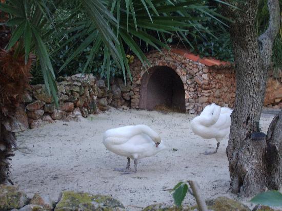 Vila Vita Parc Resort & Spa: Cygne de l'hôtel