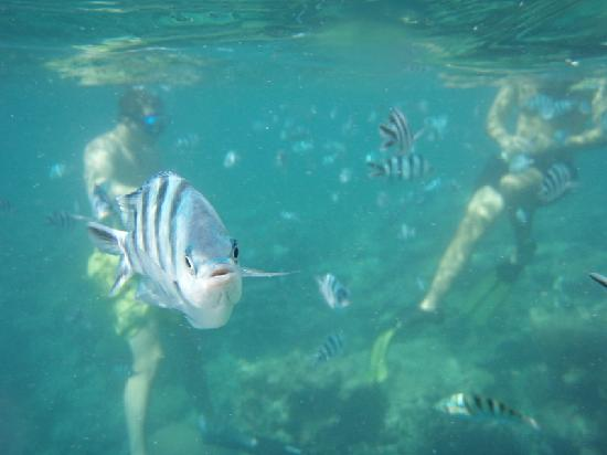 Mana Island Resort: you can hire underwater digital cameras from the hotel :)