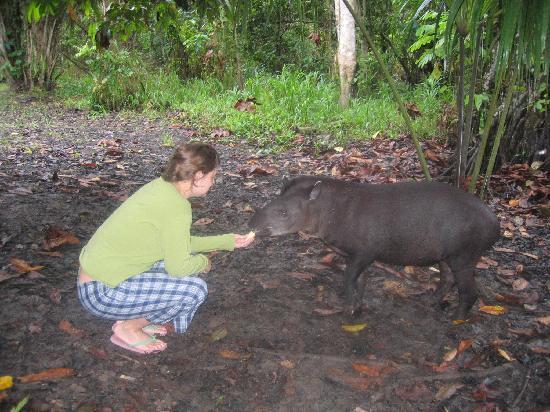 Amazon Yanayacu Lodge : Mosita, the taper outside the lodge