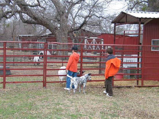 Country Woods Inn: The kids loved feeding the animals