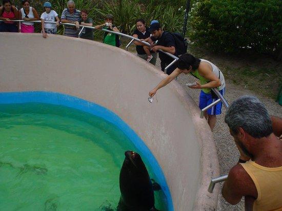 Mundo Marino: Alimentando a los lobos marinos