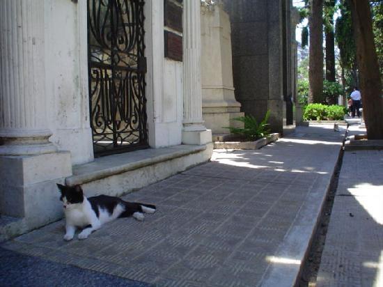 Cemitério da Recoleta: Los Gatos del Cementerio de La Recoleta