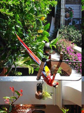 Santo Tomas Hotel: il cortile è popolato da tanti pappagalli