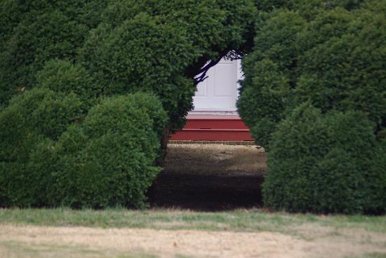 The Woodlawn Historic B&B: 200 year old Boxwood in front of main house
