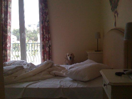 Aenos Hotel: Eco our dog in the room!