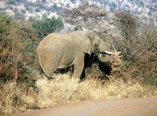 Golden Leopard Resort - Manyane: Close encounters