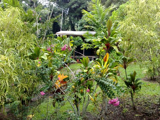 Hans' Place : House Yaka seen through some of the lush foliage