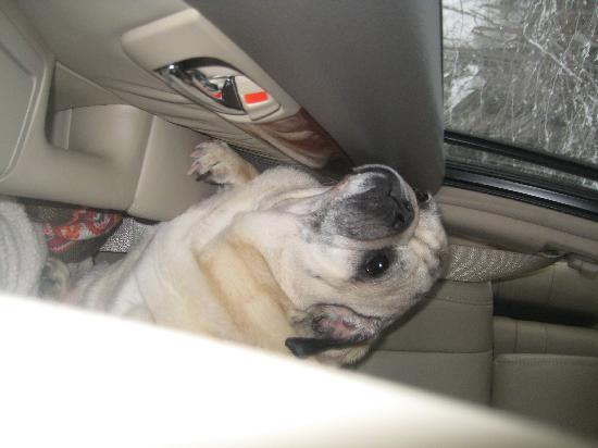Phineas Swann Bed and Breakfast Inn: Pancho can't wait to get back to Phineas Swann!