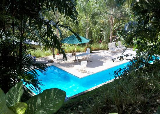 Funky Monkey Lodge: Nice pool