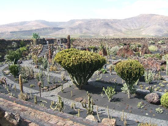 jardin de cactus general garden view