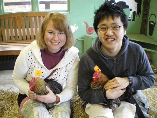 Acorn Farm: Very friendly chickens!