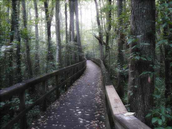 Cypress Grove Nature Park: Boardwalk