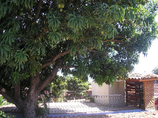 La Islita Boutique Hotel: Mango tree