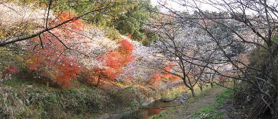 Obara Fureai Park / Shikizakura: 川見橋近辺