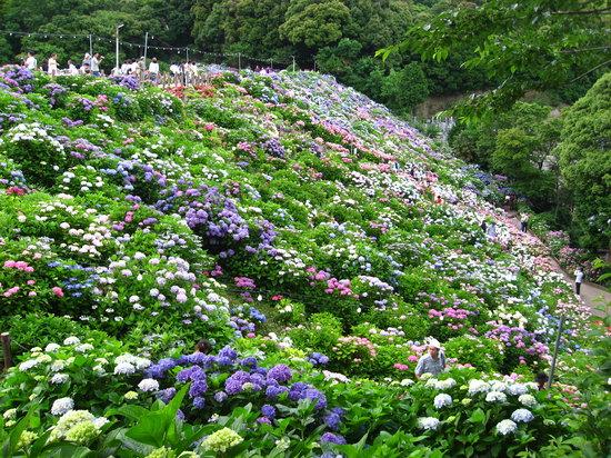 Gamagori, Japón: 形原温泉