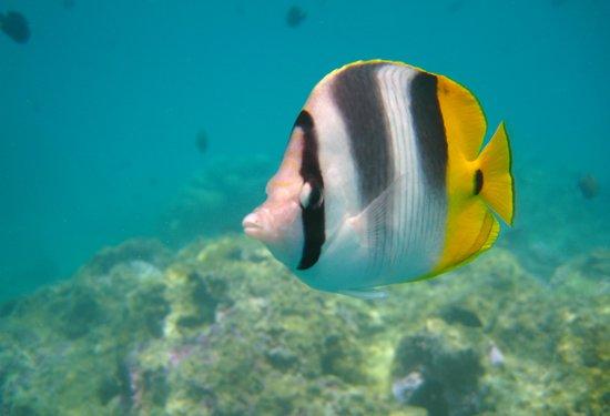 Gambar Bora Bora