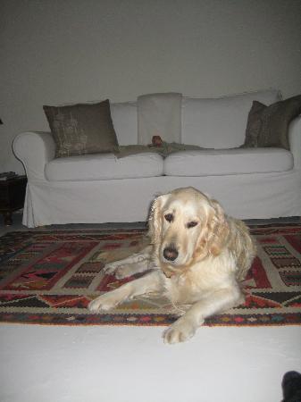 Casa la Concha: mi mascota