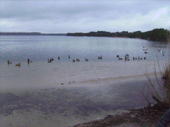 Sunparks Kempense Meren: le lac