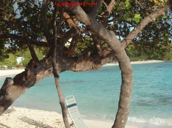 Antilles At Sapphire Beach Resort: sulla spiaggia