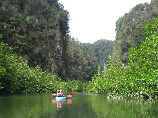 Koyao Island Resort: La mangrove