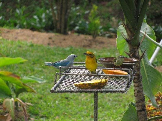 El Oasis Hotel & Restaurant: garden breakfast area