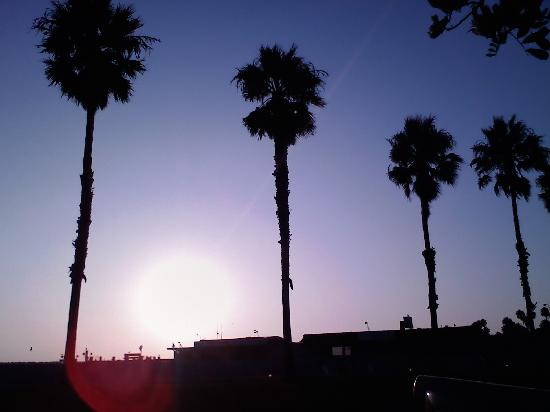 Orange County, Californien: Redondo Beach palms