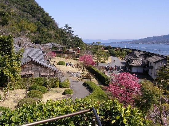 寒緋桜がとてもきれいです - Picture of Sengan-en Garden, Kagoshima - TripAdvisor