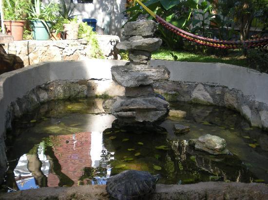 Koox City Garden Hotel: les tortues