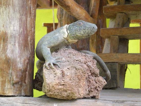 Koox City Garden Hotel: Voilà pourquoi las iguanas...