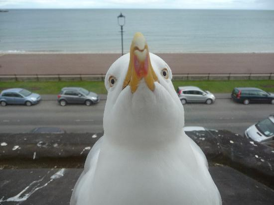 Can-y-Bae: interested seagull!