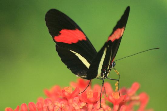 Finca Los Monos Botanical Garden: Beautiful butterfly