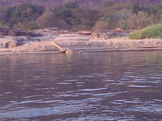Bhoothanahalli, India: Crocodile in Lake