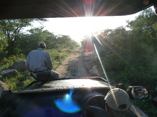 Kwa Madwala Private Game Reserve: morning drive-tracking lions