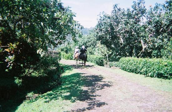 Las Alturas de Puriscal: riding horses