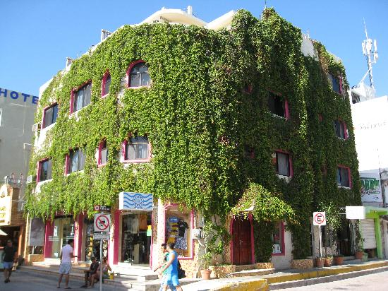 Hotel Delfin: You can't miss this place for the vines.