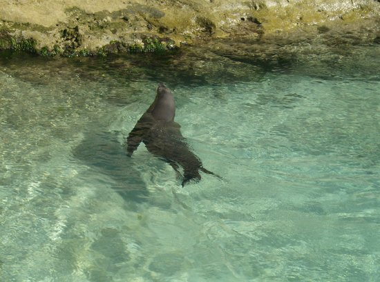 Sea Lion Encounter at Blue Lagoon