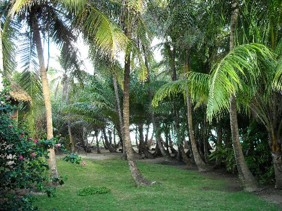 Farm Peace & Love: view from our porch to the beach