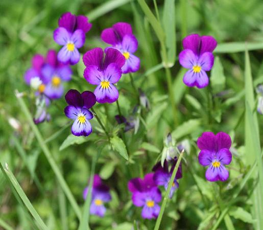 Tweedsmuir Park Lodge : some of the beautiful flowers on the grounds