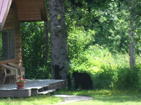 Tweedsmuir Park Lodge : bears!
